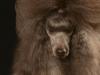 brown003-jpg