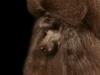 brown007-jpg